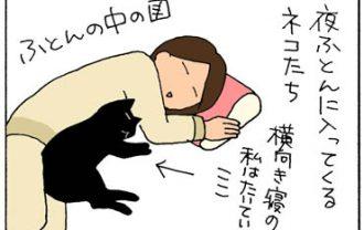 猫の安眠ポイントの4コマ猫漫画
