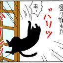 必要のないバトルをする猫の4コマ漫画