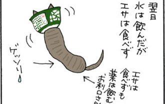 猫の避妊手術の翌日の猫漫画