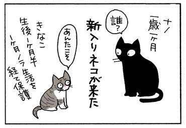 コクシジウム発症の猫漫画