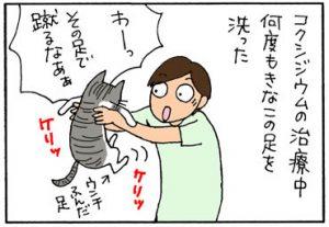 洗濯かごに入るとおとなしい猫の4コマ漫画