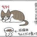 エサの好き嫌いがある猫の4コマ漫画