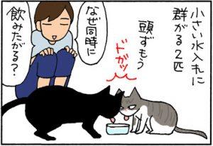 大きな水入れを買った4コマ猫漫画