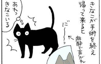 威嚇する猫の4コマ漫画