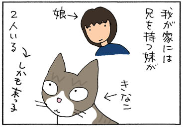 本圃に振舞う4コマ猫漫画