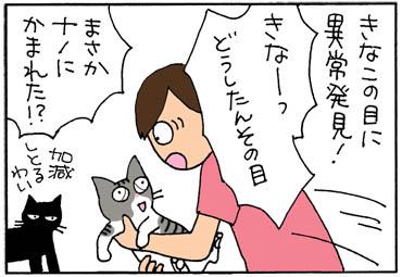 瞬膜が出る猫の4コマ猫漫画