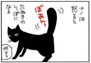 怒った猫のしっぽの4コマ猫漫画