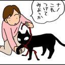 猫にハーネスをつける4コマ猫漫画
