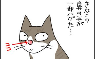 ネコの鼻の毛がハゲた4コマ猫漫画