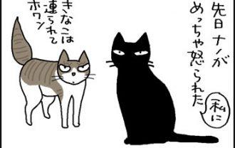弁当箱に足を突っ込んだ猫の4コマ猫漫画