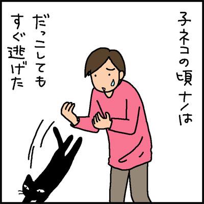 だっこ猫に育つかどうかの4コマ猫漫画