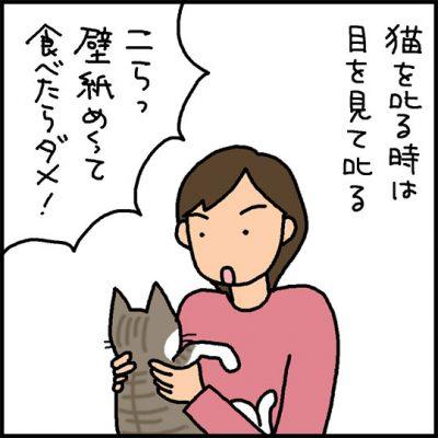 叱られる猫の4コマ猫漫画