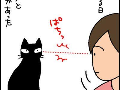 猫と目があった時はこうする猫漫画