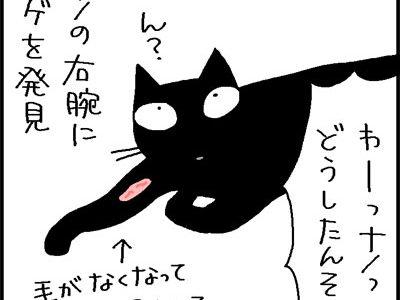舐めすぎてハゲた猫の4コマネコ漫画