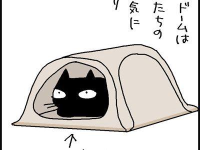 使い方色々 どれでも楽しければいいのだ! 猫のいる楽しい毎日 笑わしてくれるよなぁ