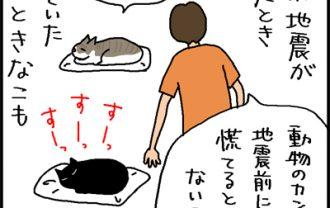 地震と猫の反応の4コマ猫漫画