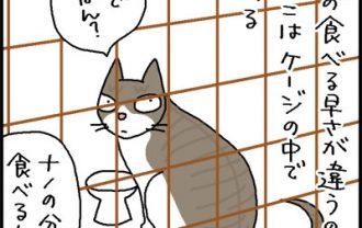 不信な目を向ける猫の4コマ猫漫画