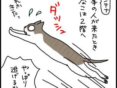 アンテナ工事の人が来たとききなこはどうするかの4コマ猫漫画