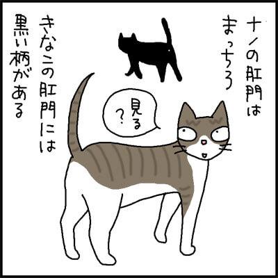 猫の肛門の柄の4コマ猫漫画