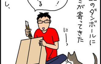 段ボールに入るネコの4コマ猫漫画