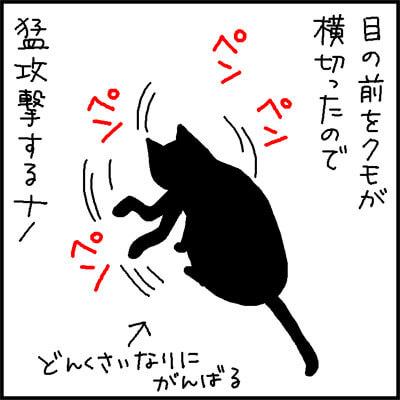 蜘蛛を狩る猫の4コマ猫漫画