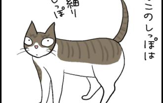 猫のしっぽの軟らかさの4コマ猫漫画