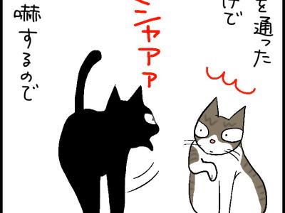 普段はシャアシャア言ってるのに人間のいない所では仲のいいネコの4コマ猫漫画