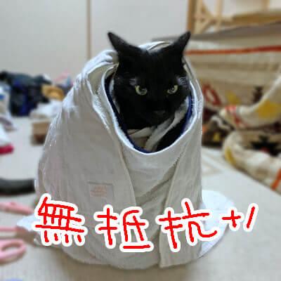 ぐるぐる巻きにされても無抵抗な猫