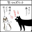 怒るポイントが分からない猫の4コマ猫漫画