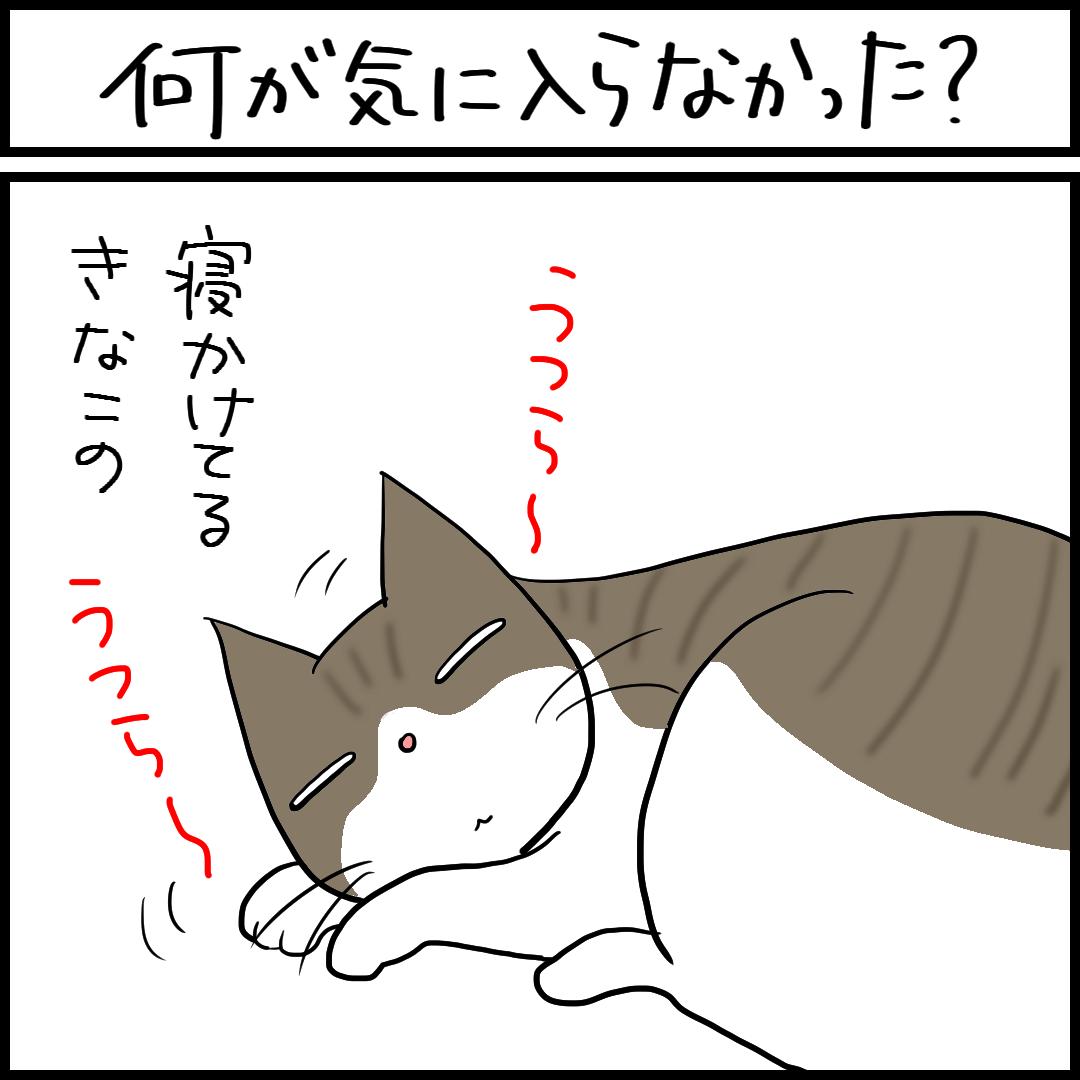 猫の額をなでる4コマ猫漫画