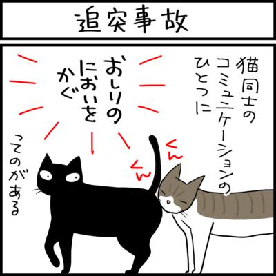 2匹の衝突事故の4コマ猫漫画