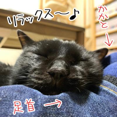 黒猫ナノのお気に入りの場所