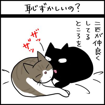 仲良いところを見られたくない猫の4コマ猫漫画