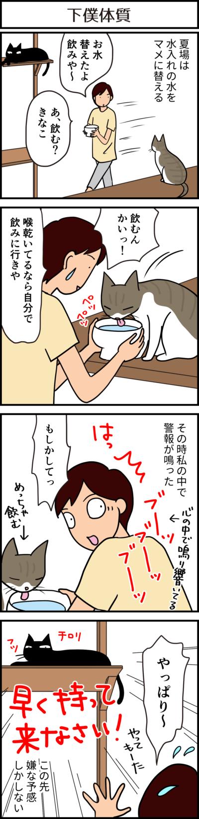 猫の飲み水の4コマ猫漫画
