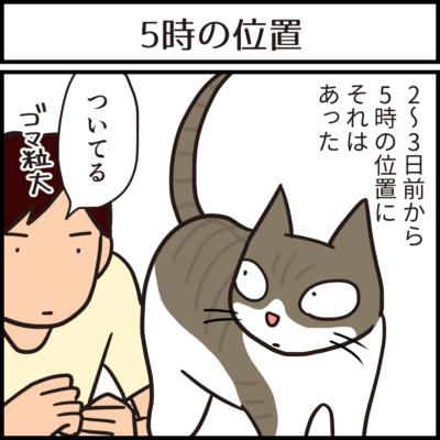 ついてる猫の4コマ猫漫画
