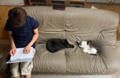 猫と人がソファーに座る