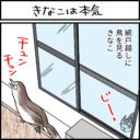 網戸越しに鳥を狩る猫の4コマ漫画
