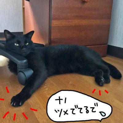 ツメが出っぱなしの黒猫