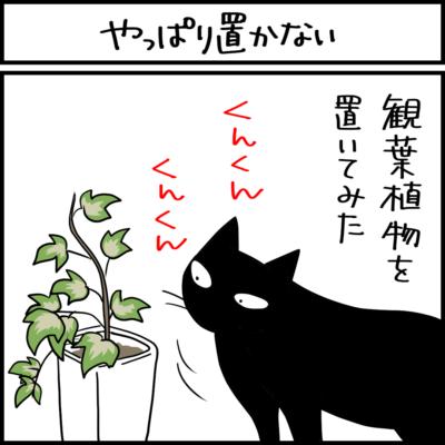 猫と観葉植物の4コマ猫まんが