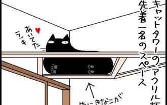 強引な猫の4コマ猫まんが