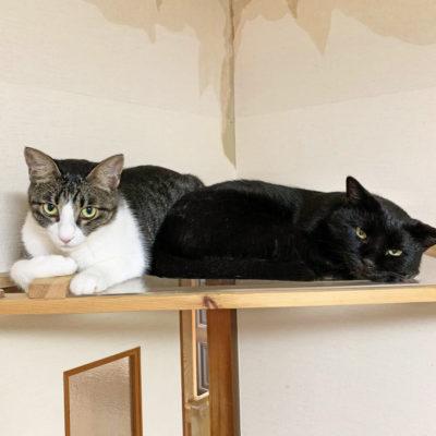 キャットタワーの上で寝る2匹の猫