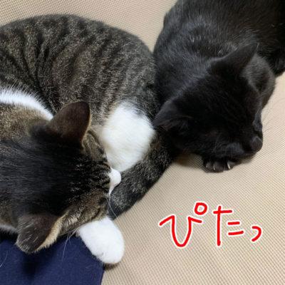 くっ付いて寝る猫の頭