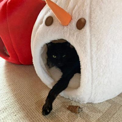 ドームベッドに入る黒猫