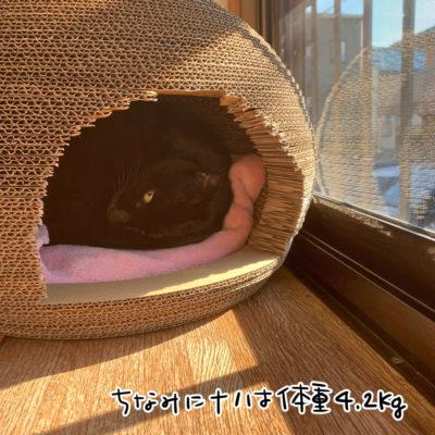 猫のくらで寝る黒猫