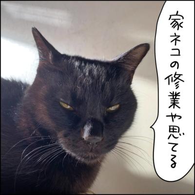 無になる黒猫