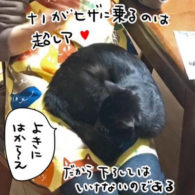 膝に乗る黒猫
