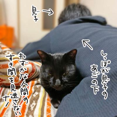 息子と黒猫ナノ