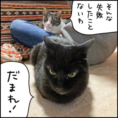 黒猫とキジシロ猫
