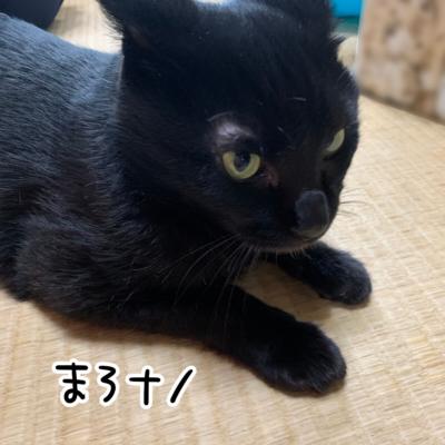 黒猫の目の上がハゲ