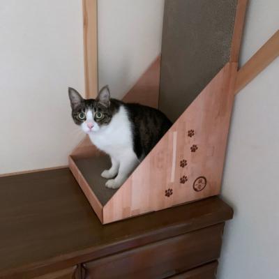 猫壱バリバリボード